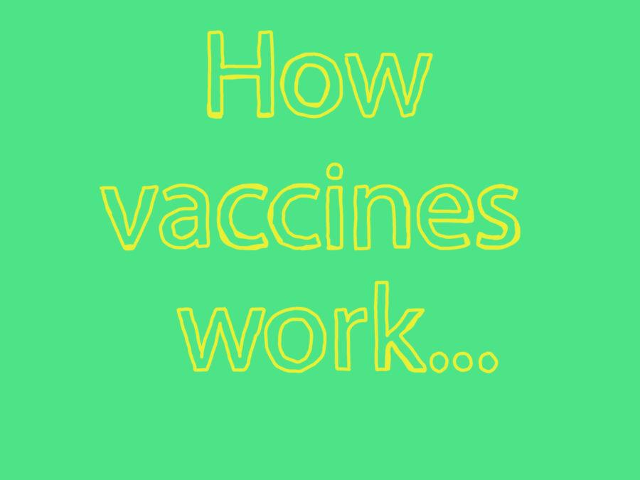 How+vaccines+work